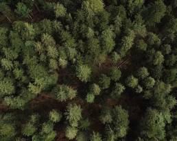 garmisch filmagentur forestisland